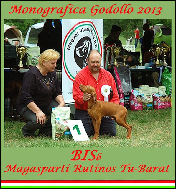 Mejor Muy Cachorro Monográfica del Club Vizsla de Hungría