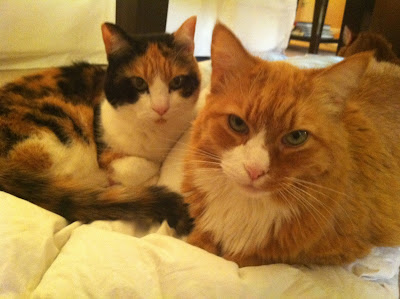 Daisy & Bailey the Sew Fabulous Quilt Shop Cats