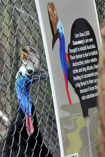 cassowary reptile park