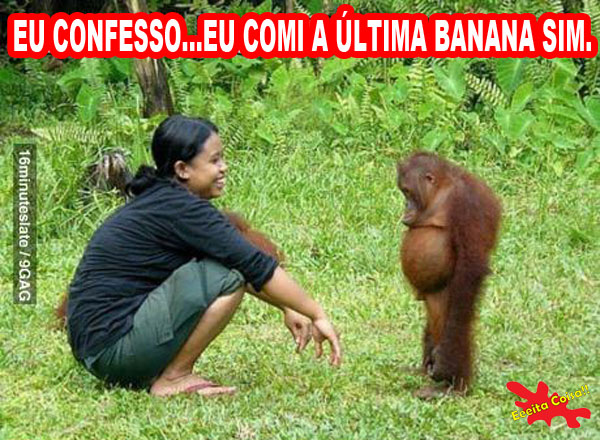 admitir erro, orangotango, banana, eeeita coisa