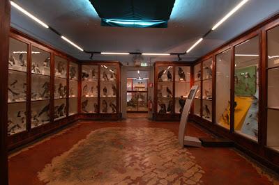 Museo di Storia Naturale Zoologia - La Specola
