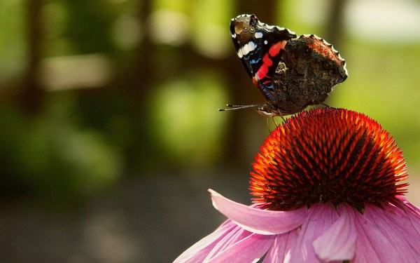 Red Flowers Butterfly High Resolution Cool Images Desktop