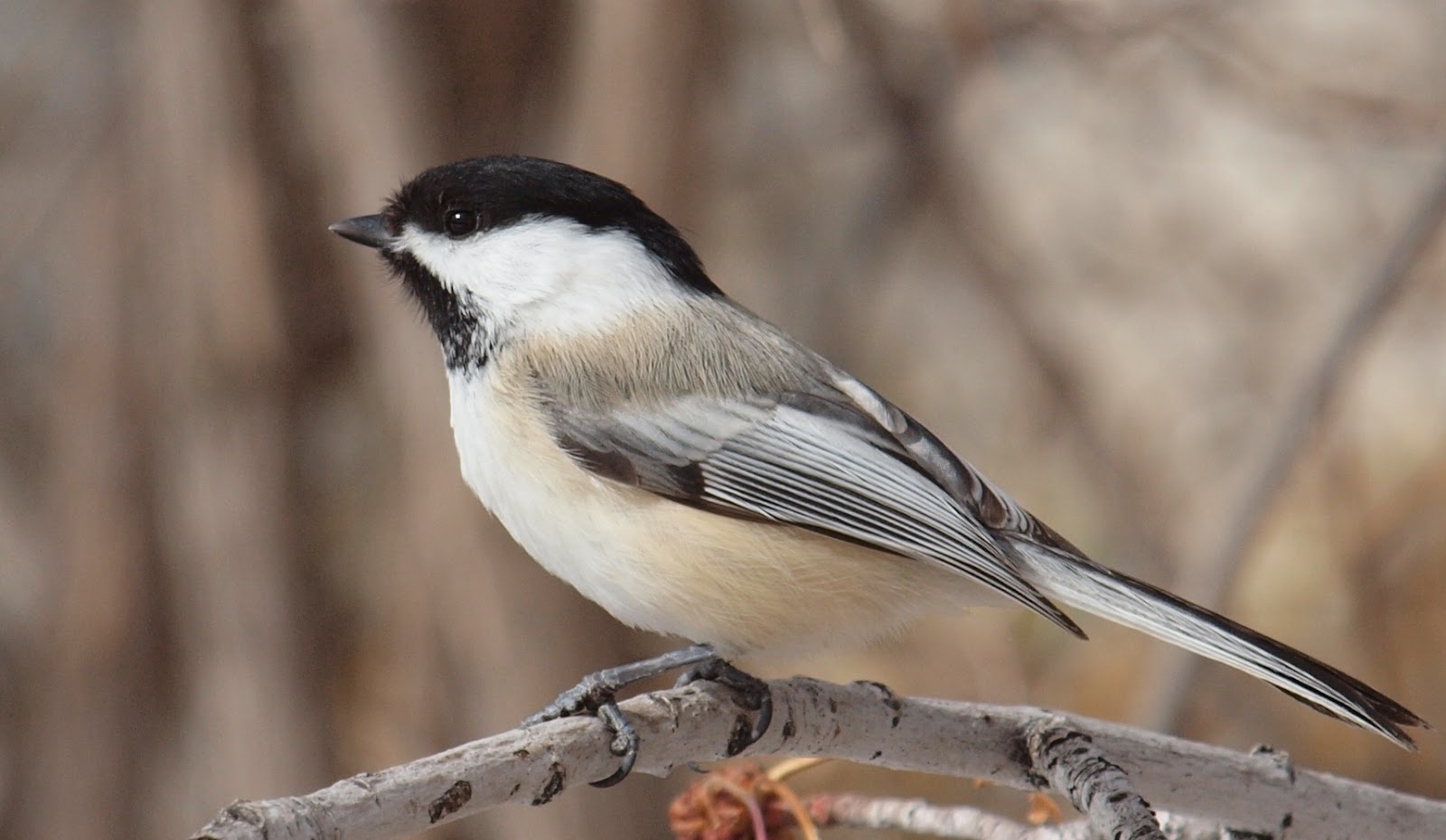 birding is fun backyard birding