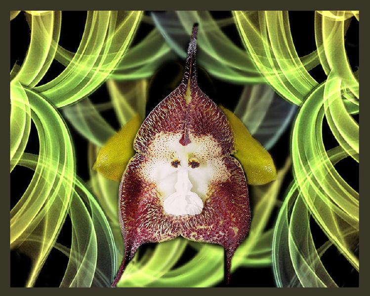 La naturaleza entre nosotros las orqu deas - Como cuidar una orquidea en casa ...