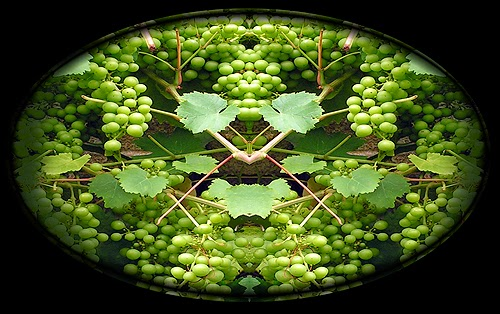symmetry in nature does not apply