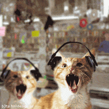 GATOS OUVINDO BOLT THROWER !!
