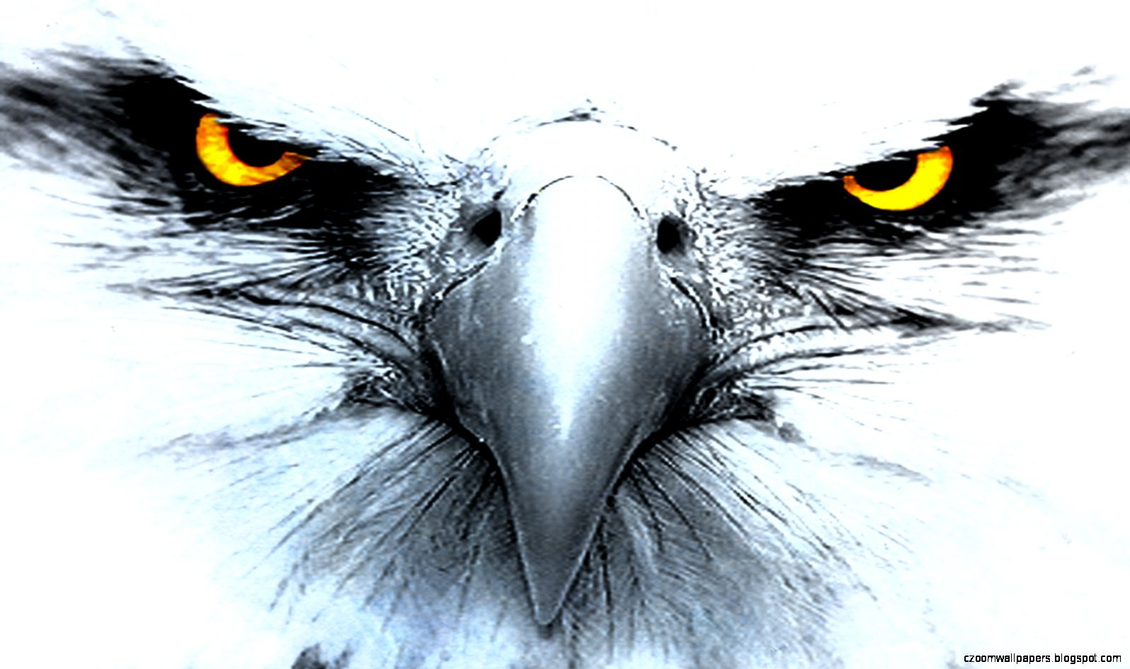 Eagle HD Wallpapers   New WallpapersNew Wallpapers