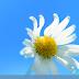 Merubah Tampilan Kali Linux Menjadi Windows 7/8