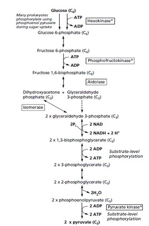 Karunia cahaya fajar pemecahan asam piruvat menjadi asam laktat sering disebut fermentasi asam laktat seperti terlihat pada reaksi di bawah ini ccuart Choice Image