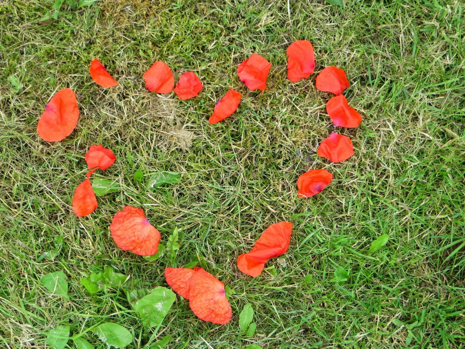 pretty wild red poppies