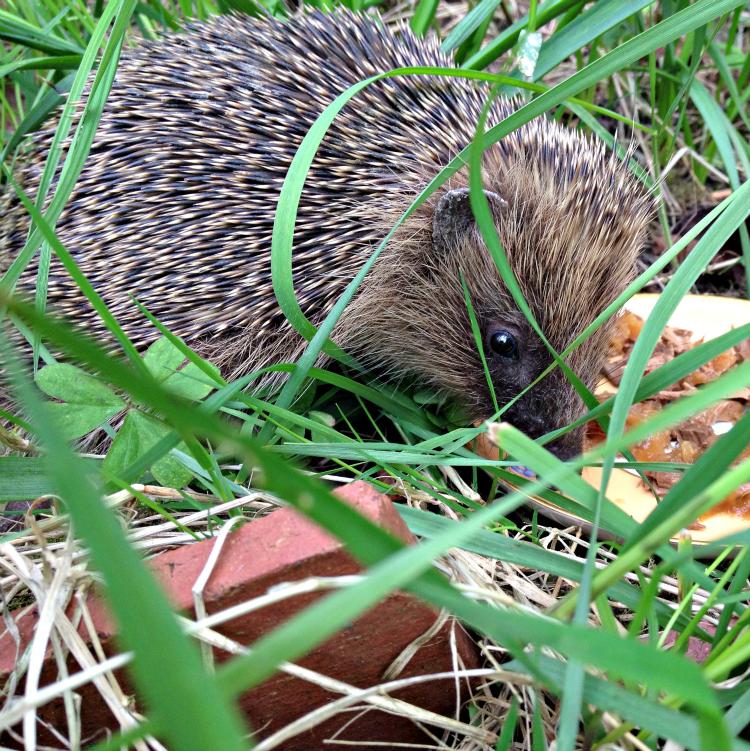 Hedgehog Food Cats Wont Eat