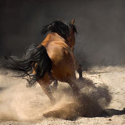 Foto de un caballo levantando tierra