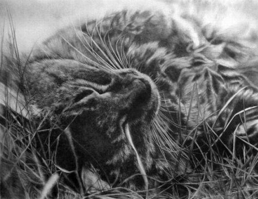 Gambar Kucing Pensil godean.web.id