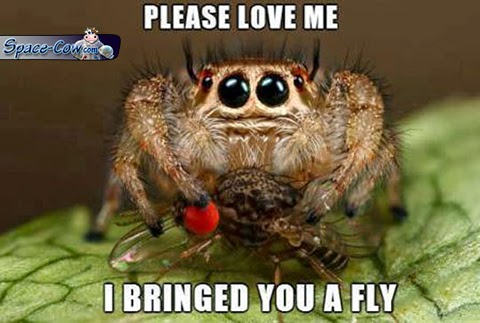 funny cute spider picture