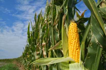 http://deltafarmpress.com/government/grain-dealer-oversight-moves-arkansas-legislative-spotlight