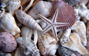 sell shells online