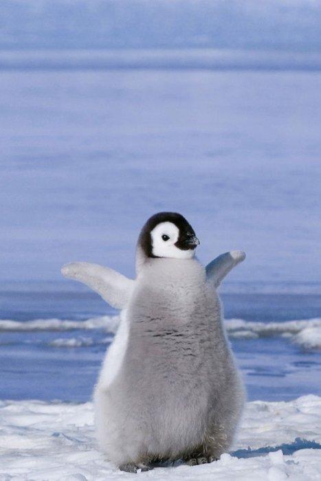 Cute penguin - photo#14