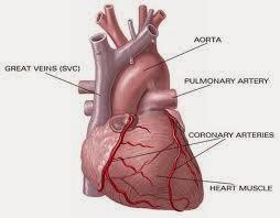 Pengobatan Tradisional Penyakit Jantung