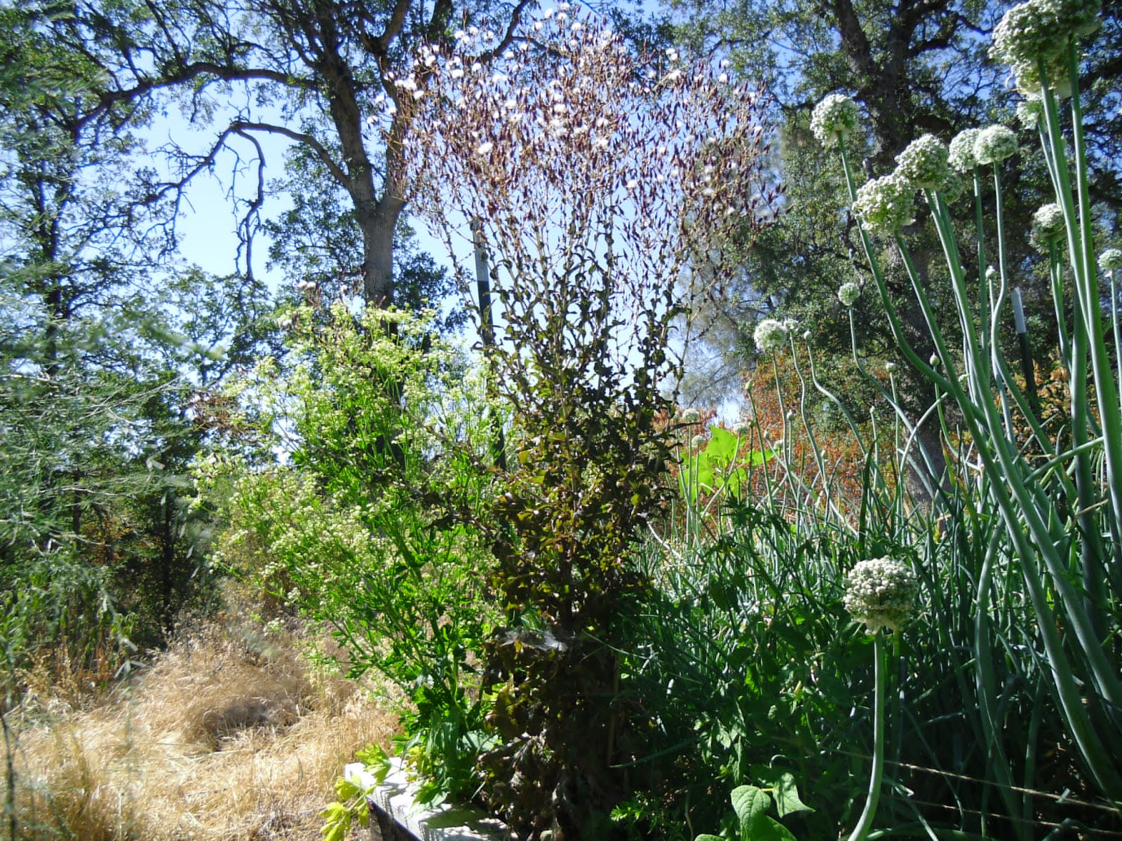 2014 Garden Album