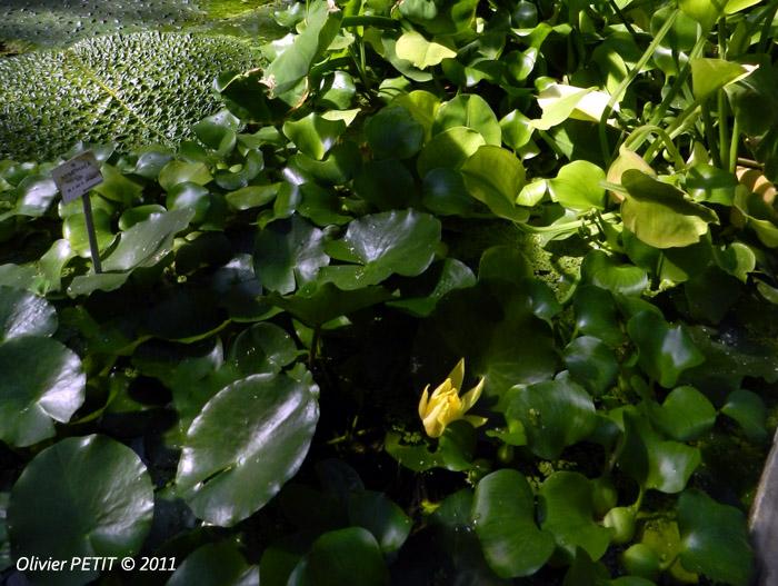 VILLERS-LES-NANCY (54) - Les serres du jardin botanique du Montet-Nympheas
