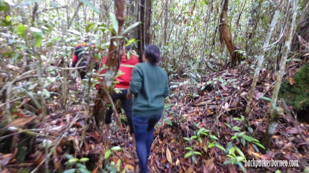 wisata trekking di hutan kalimantan