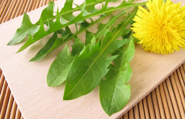 Osteoporosis simple herbal remedies dandelion