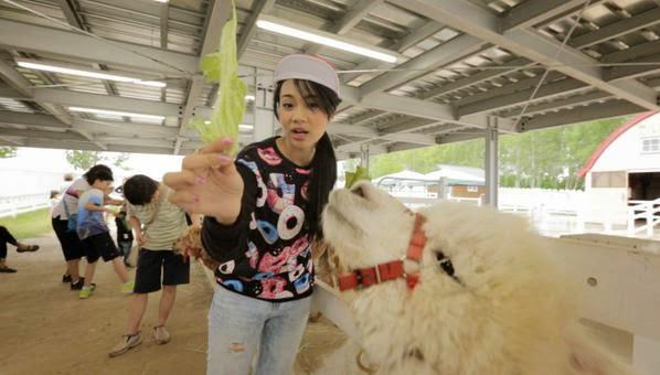Amanda Zevanya Alpaca Farm