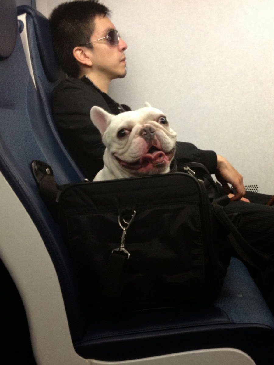 Cute dogs - part 7 (50 pics), pug in a bag in train seat