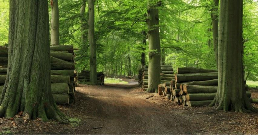 Ac rcate a las sociales actividad explotaci n forestal for Importancia de los viveros forestales