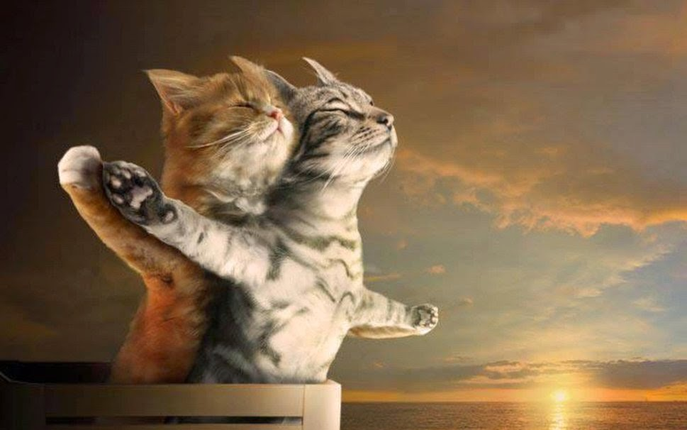 2-Kitty-Cats-in-Love-wallpaper.jpg