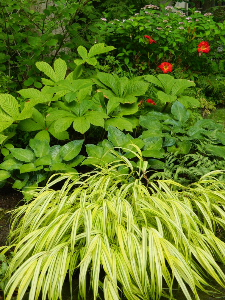 Layers of perennials and shrubs in a Toronto shade garden by garden muses-a Toronto gardening blog