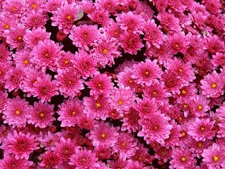 Gambar Gambar Bunga