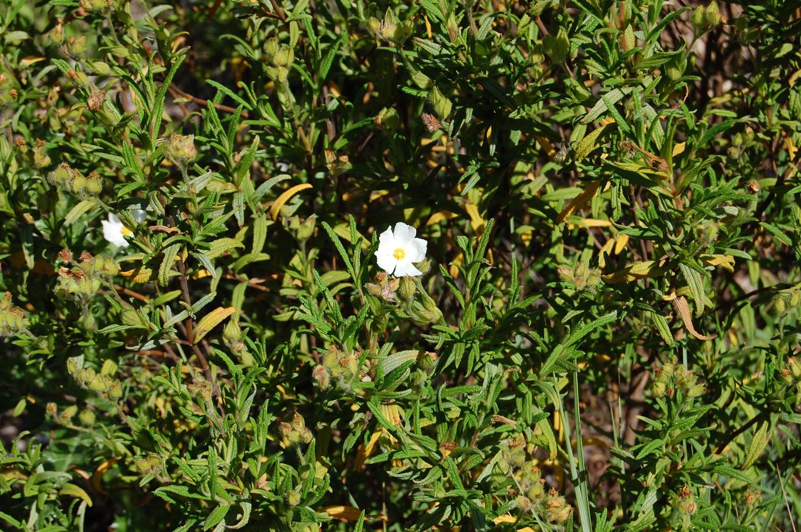 plantas beleza e diversidade