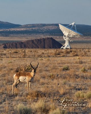 Very Large Array, National Radio Astronomy Observatory, pronghorn antelope, New Mexico