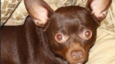 Chihuahua News