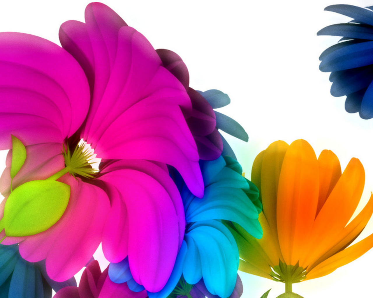 Imagem De Fundo   Flores Em V  Rias Cores Em Fundo Branco