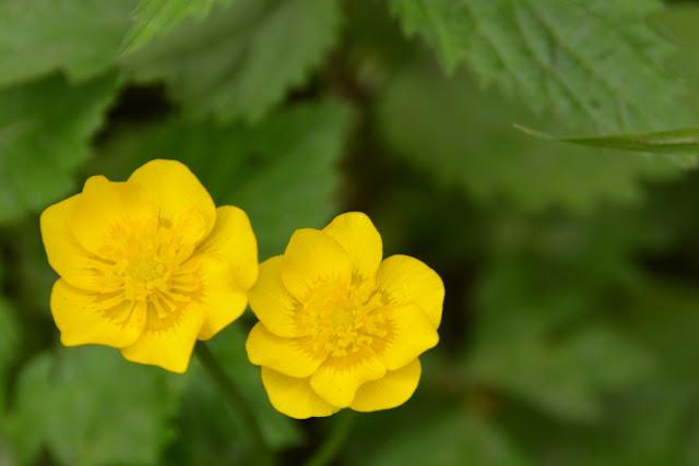 Schwangau flowers