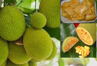 Jack fruit. ffeene ,uganda,fruits in Uganda