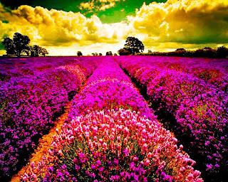 manto de flores rosa hasta el cielo