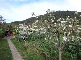 Construção sustentável de uma pequena chácara agrícola