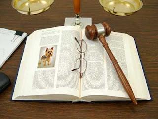 Закон о защите животных имеет место быть!