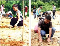 Planting trees to bond together