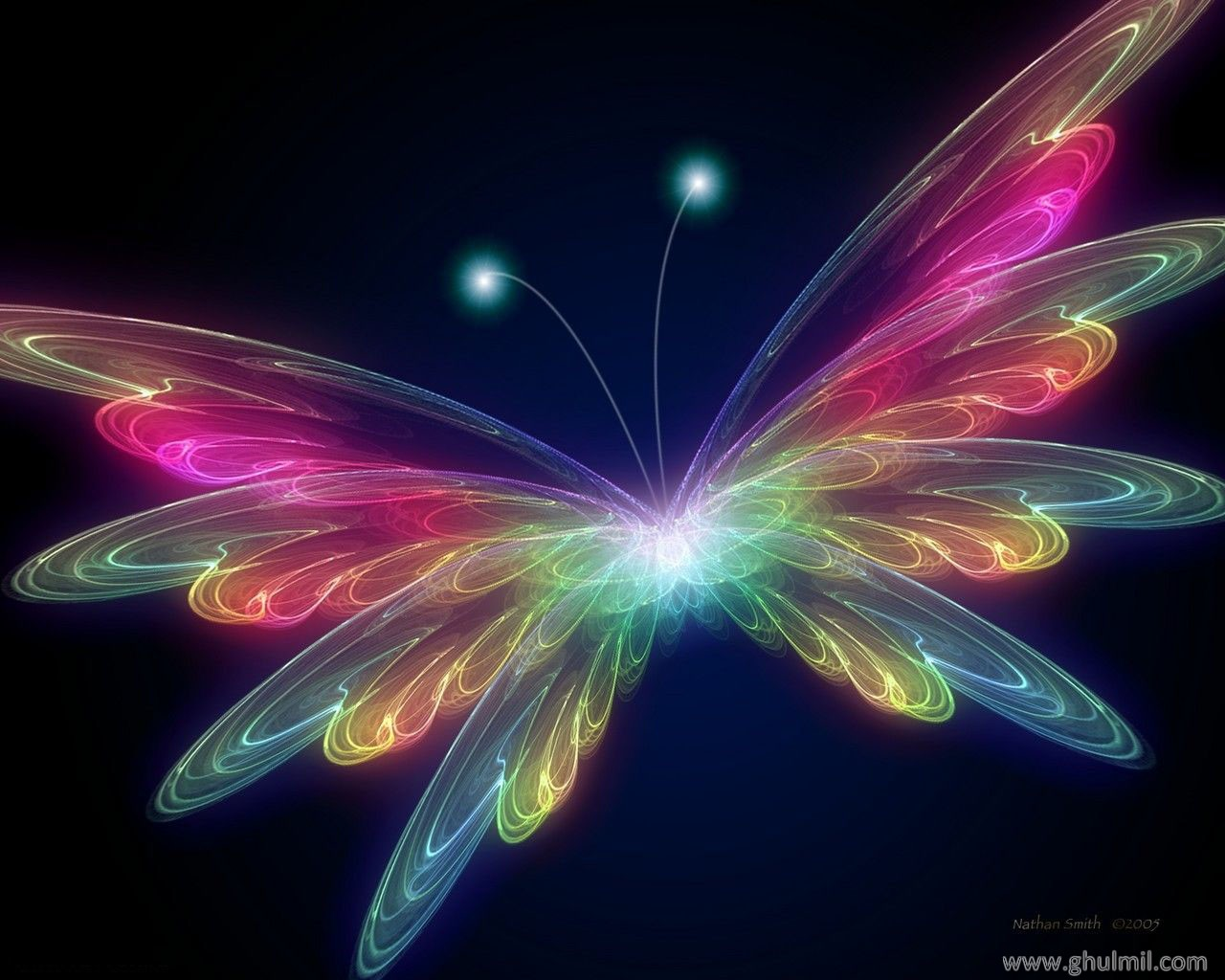 Colorful butterfly wallpaper ~ Funny Wallpaper
