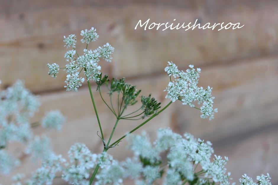 Morsiusharso