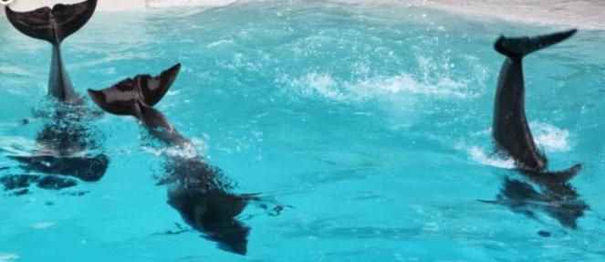 dolphins dancing marineland