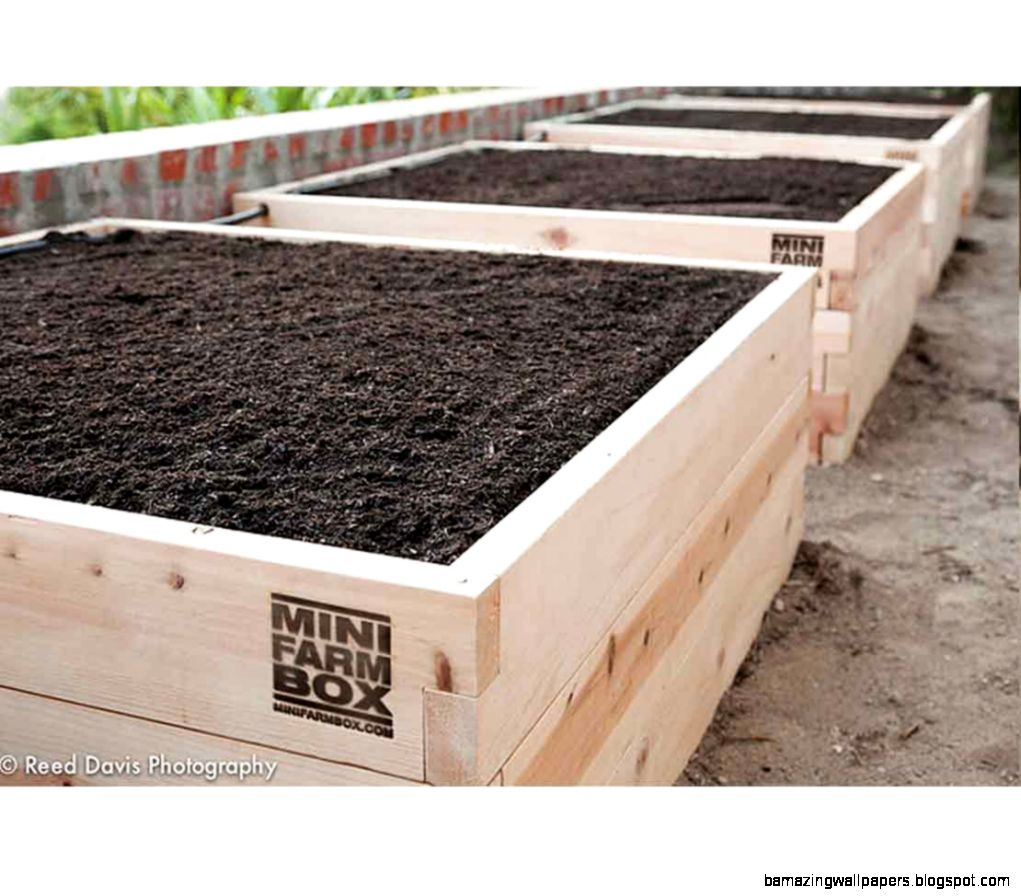 Raised Garden Kits  MinifarmBox