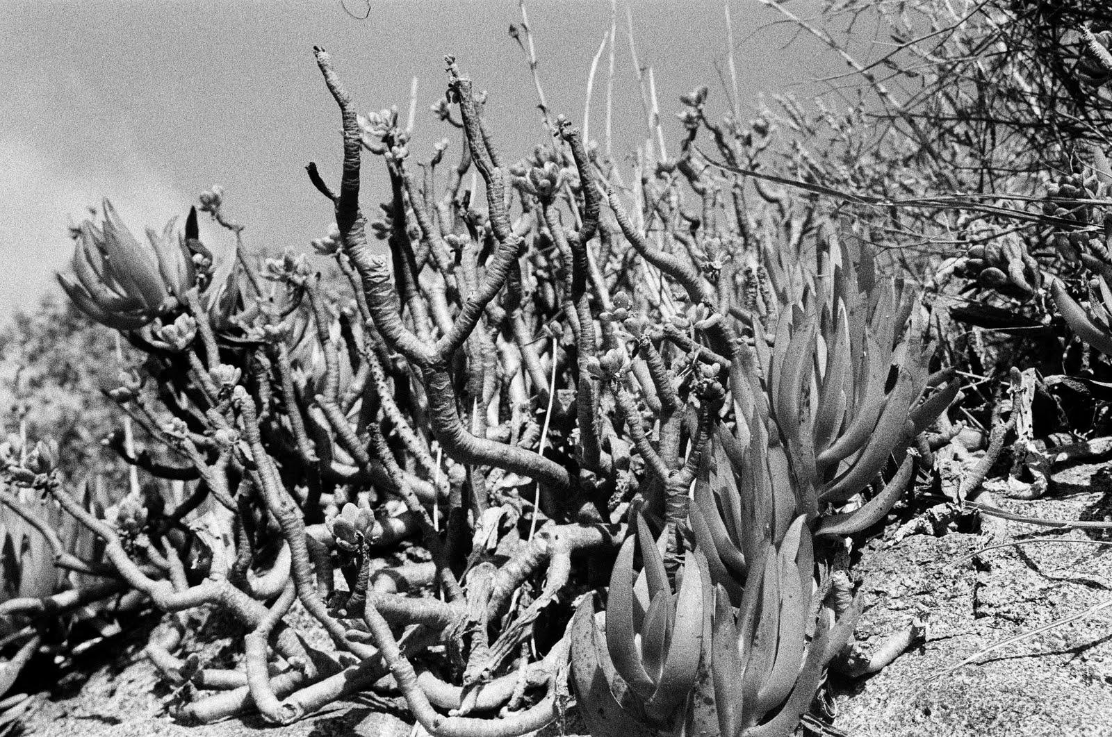 Jungle Nausea Untitled