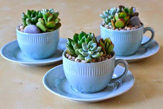 mini jardim suculentas:Mini jardim e arranjos com suculentas! – Jeito de Casa – Blog de