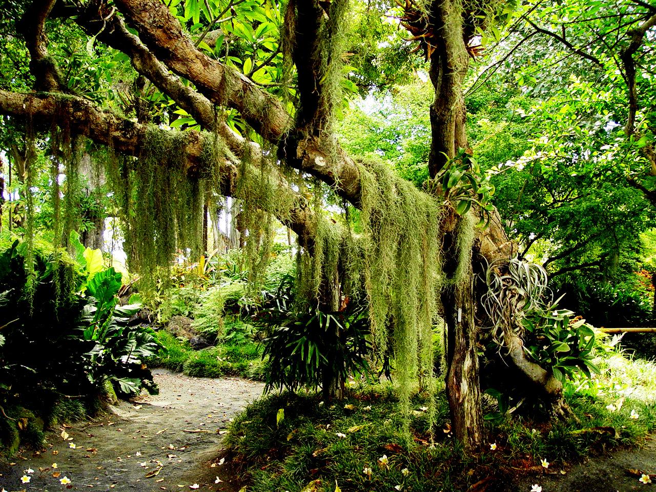zonas climaticas del mundo Hawaii-tropical-forest