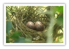 Udawattakele Bird Sanctuary